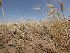 На юге республики сохранится засуха