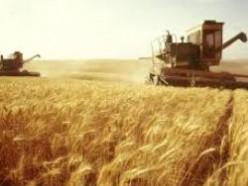 План страны: намолотить 9 млн тонн зерна