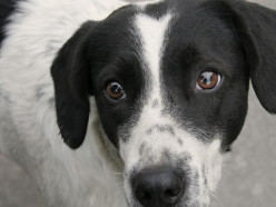 В Беларуси вводится уголовная статья за жестокое обращение с животными